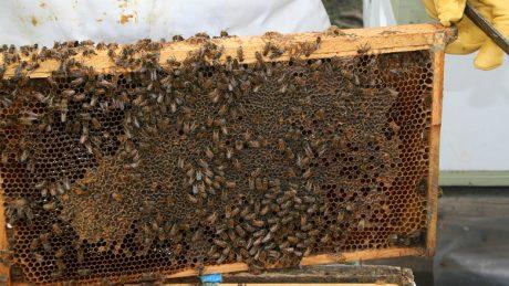 Apiculture : tout savoir sur la ruche warré